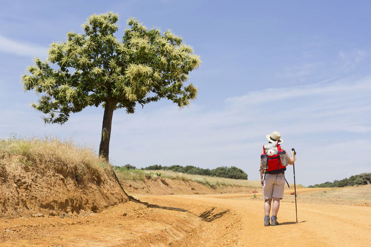 Rear view of hiker in hat with backpack walking on dirt road against sky during sunny day