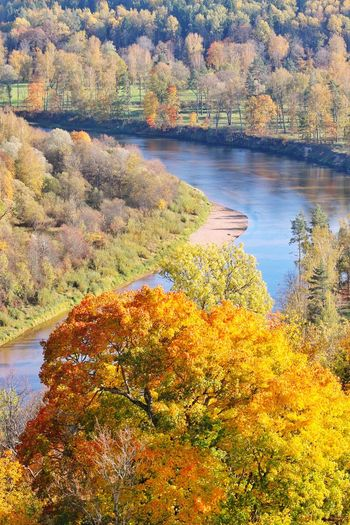 River Landscape_Collection Landscape_photography Lativia Autumn Autumn colors Autumn Leaves Yellow Water Tree Lake Sky Landscape Blooming Petal Standing Water Calm Countryside Non-urban Scene