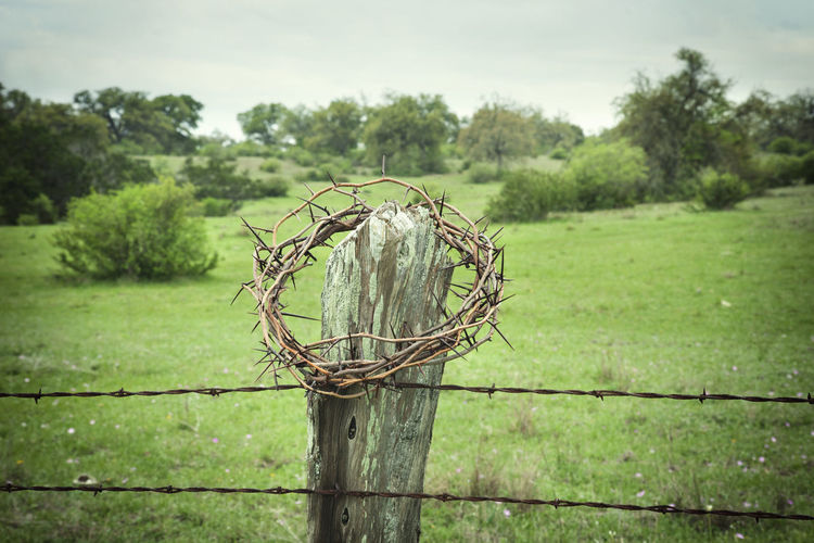 Crown of thorns on a fence post with barbed wire in the Texas Hill Country Barbed Wire Circle Crown Of Thorns Easter Fence Green Color Jesus Christ Pain Post Religion Rural Sacrifice Selective Focus Suffering Symbol Texas Texas Hill Country Thorns