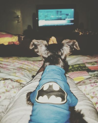 He got his first class seat in the home theater... lol Relaxing Watching Movie Chill At Home My Puppy My Pets♥ Cute♡