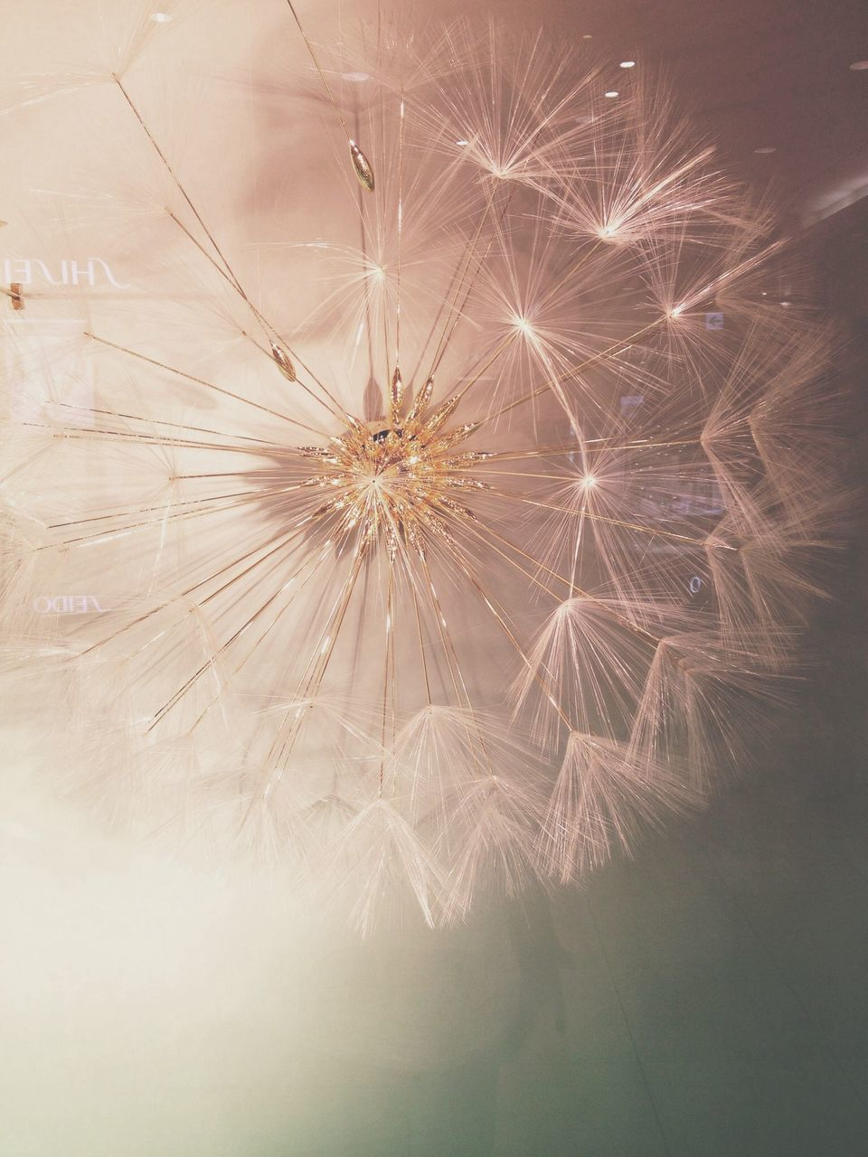 dandelion, flower, growth, no people, fragility, flower head, close-up, nature, outdoors, freshness, day