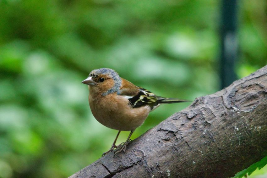 Bird Perching Tree Tree Trunk Close-up Animal Themes