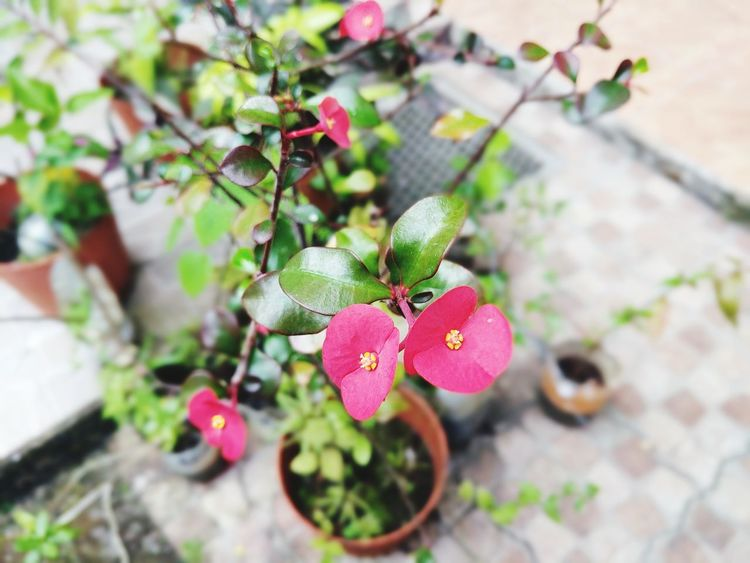 Plant No People Outdoors Growth Day Nature Fragility Close-up Flower Beauty In Nature Freshness Branch Tree