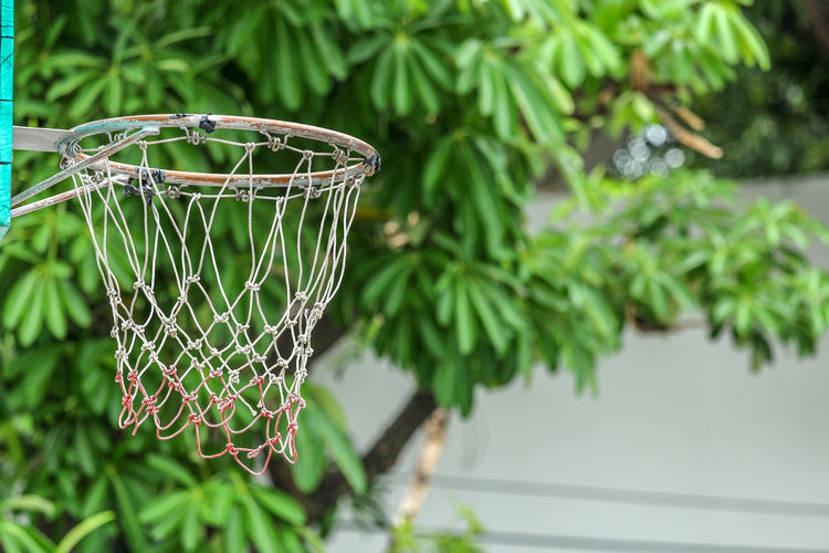 Old basketball hoop in outdoor playground. Focus at hoop and net with blurred background of green tree and white building. Just do it, be a champion. Exercise Growth Hoop Basket Close-up Day Focus On Foreground Freshness Green Growth Leaf Metal Nature Net - Sports Equipment No People Outdoors Plant Plant Part Playground Point Score Selective Focus Sport Street Tree