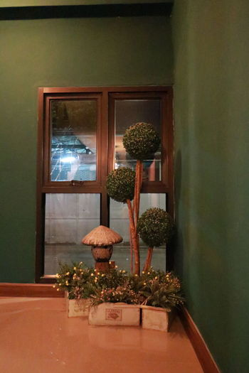 Plant Window No
