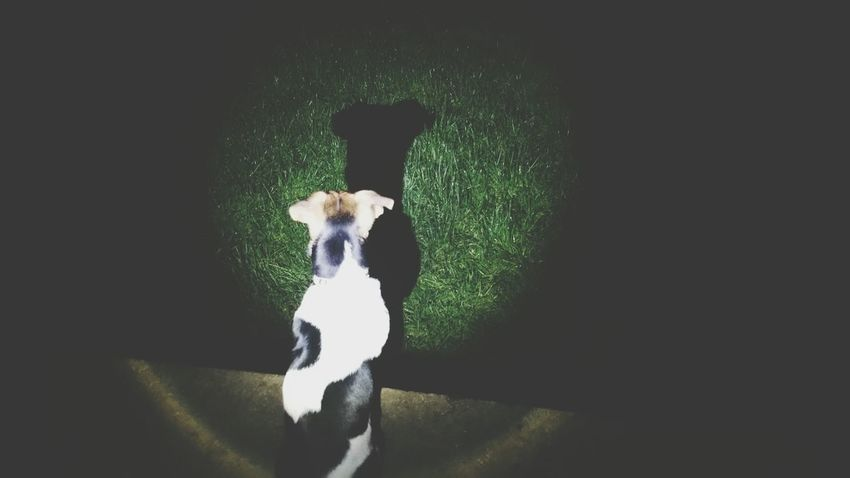 My Dog Mini Jack Russell Shadow Creative Light And Shadow Torchlight Midnight