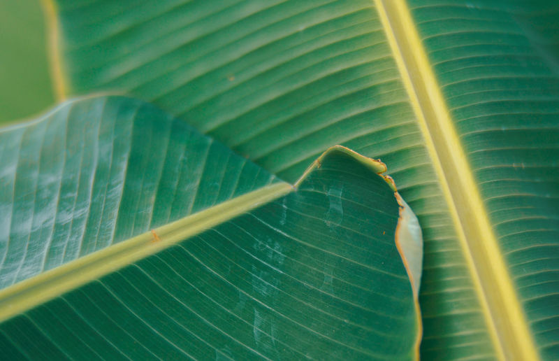 Close-up of leaf on plant leaves