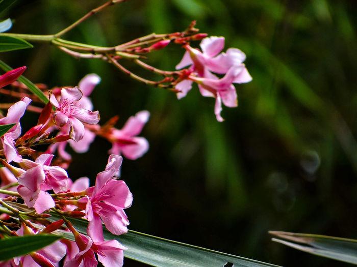 FLOWERS Flower Head Flower Pink Color Petal Close-up Plant Flowering Plant Plant Life In Bloom Blossom Blooming Pollen Pistil Stamen Orchid