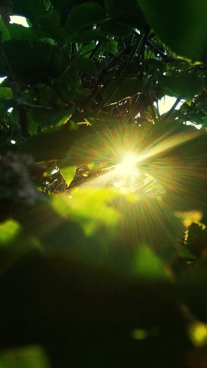 peek at the leaves Sunlight Sunbeam Sky Close-up Shining Sun Sunrise Outline Growing