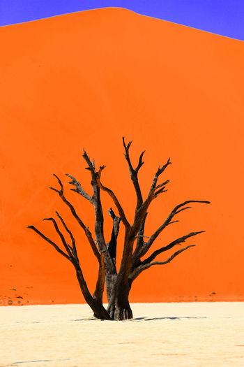 Deadvlei Namibia Ssosusvlei Arid Climate Bare Tree Branch Day Desert Landscape Lone Nature No People Outdoors Remote Sky Tranquility Tree First Eyeem Photo