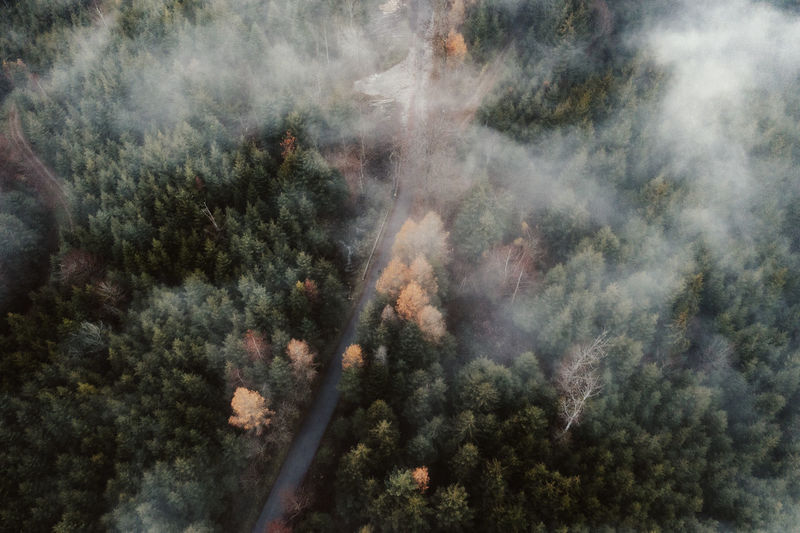 Forest Woods Tree Pine Tree Trees Fog Aerial View Aerial Photography Drone Photography Autumn Nature Scenics - Nature Outdoors High Angle View Street