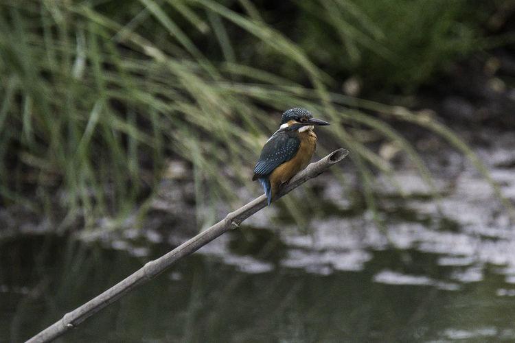 Birds Birds In Flight Birds In The Wild Nature No People Outdoors Villa Fogliano (Italy)