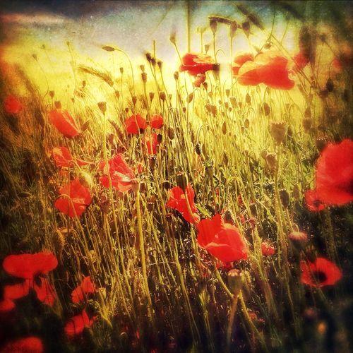 EyeEm Best Shots - Flowers EyeEm Best Shots NEM Submissions NEM Landscapes IPhoneography