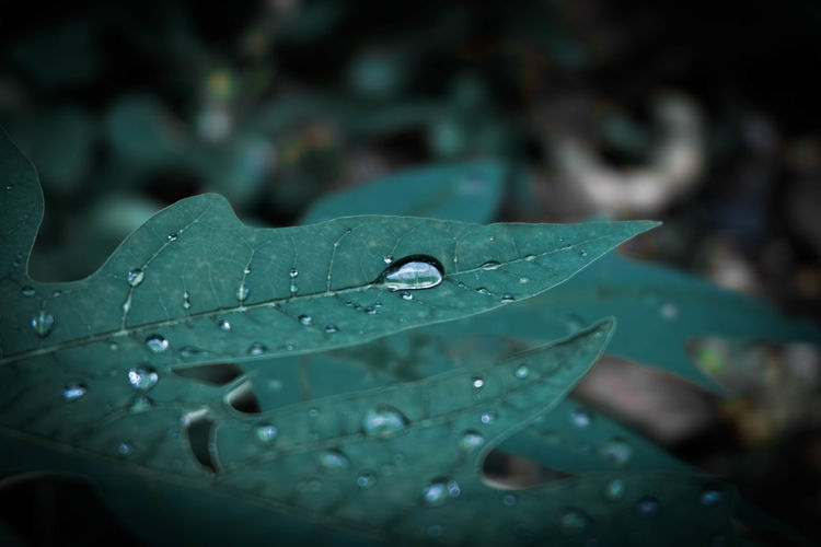 Beauty In Nature Growth Nature No People Focus On Foreground Plant Part Close-up Drop Water Wet Purity Freshness Day Leaf Outdoors Rain Plant Dew Flower Green Color RainDrop Leaves EyeEm Nature Lover EyeEmNewHere EyeEm Best Shots