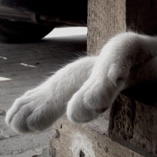 Cat Lovers Amoanatureza Amoanimais Nature First Eyeem Photo