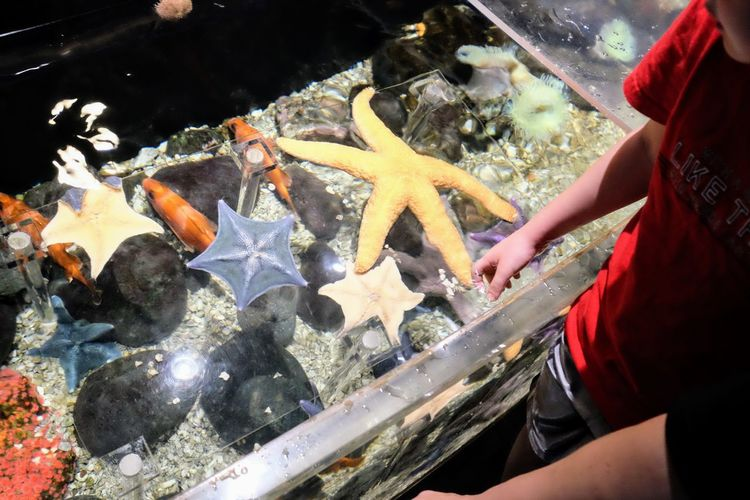 Visual Journal September 2017 Omaha's Henry Doorly Zoo and Aquarium, 3701 S 10th Street, Omaha, NE 68107 A Day In The Life Asteroidea Camera Work Echinoderm FUJIFILM X-T1 Omaha, Nebraska Photo Essay Sea Stars Storytelling Suzanne And Walter Scott Aquarium Visual Journal Zoo Animal Themes Animals In The Wild Aquarium Close-up Day Educational Fish Food Food And Drink High Angle View Human Body Part Human Hand Large Group Of Animals Lifestyles One Person Outdoors People Photo Diary Real People Sea Life Seafood Starfish  Travel Destinations