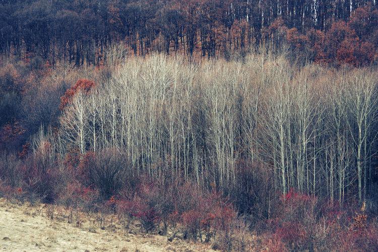 Full frame shot of trees on field in forest
