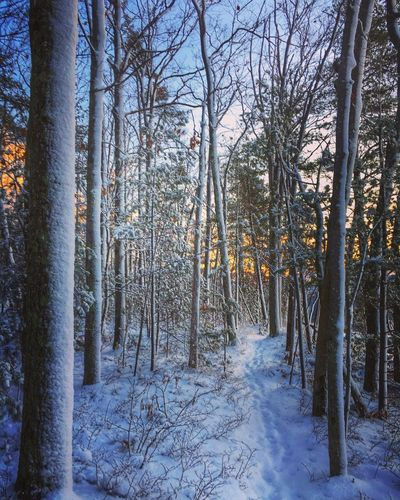 New Hampshire Frosty Mornings Scenics Outdoors Cold Temperature Tranquil Scene Sunrise Winter Snowy Forest Winter Scene Winter Forest Beauty In Nature Winter Tree Winter Hike Finding New Frontiers The Great Outdoors - 2017 EyeEm Awards Iftreescouldspeak