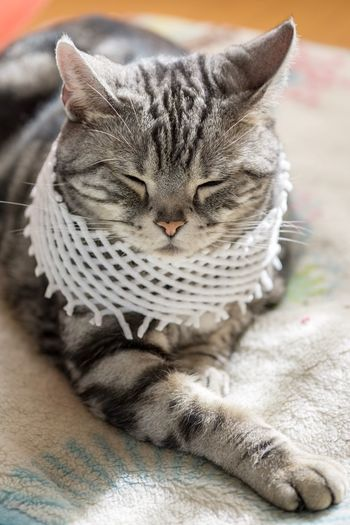 Domestic Cat Indoors  Feline Pets Mammal Domestic Animals Animal Themes