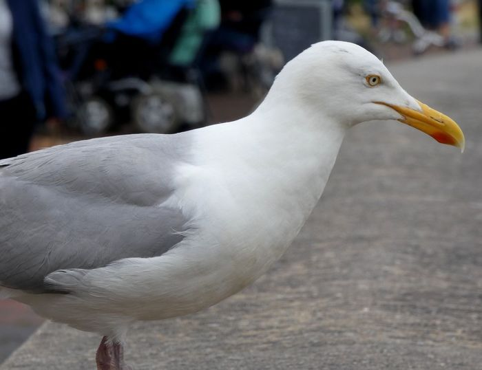 Möwe ♥️⛵ Bird
