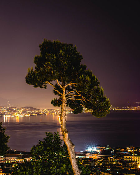 Illuminated tree by sea against sky at night