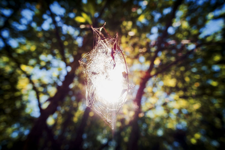 Animal Themes Beauty In Nature Branch Close-up Day Focus On Foreground Fragility Hanging Leaf Lens Flare Low Angle View Nature No People Outdoors Sky Sunlight Tree