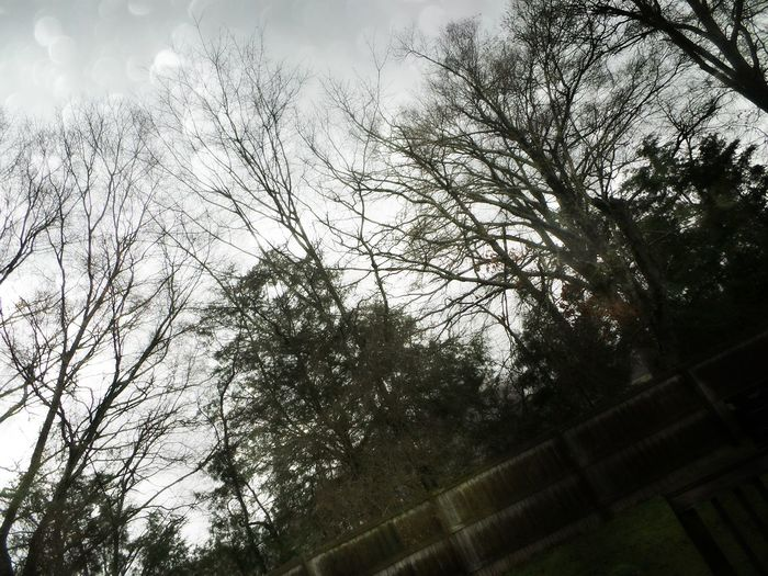 Storms Are Coming Dark Sky Dead Trees Backyard Dark Grass Raining Old Fence . Sequin Overlay Sky