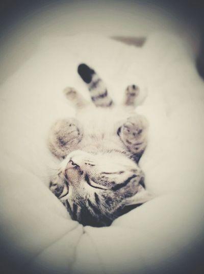 Beautiful Cat ❤