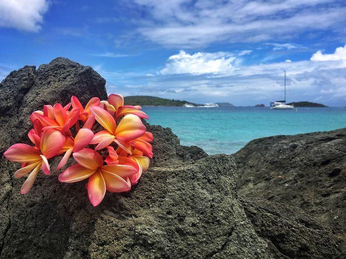 Flowers on rock by sea against sky