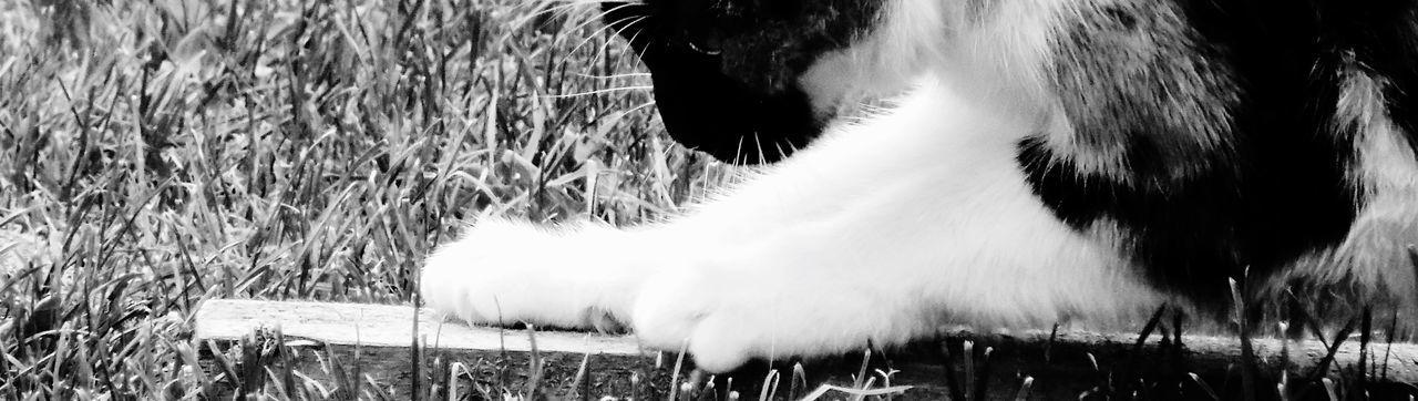 My Cat Mycat♥ Mycat My Cats Cat Cats Taking Photos