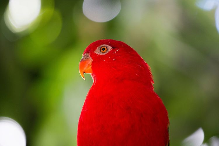Red bird Animal Animal Themes Red Bird Vertebrate Animal Wildlife One Animal Animals In The Wild Parrot No People Close-up Nature Outdoors Focus On Foreground Green Color Pets Domestic Animals In Captivity Perching Day The Great Outdoors - 2018 EyeEm Awards