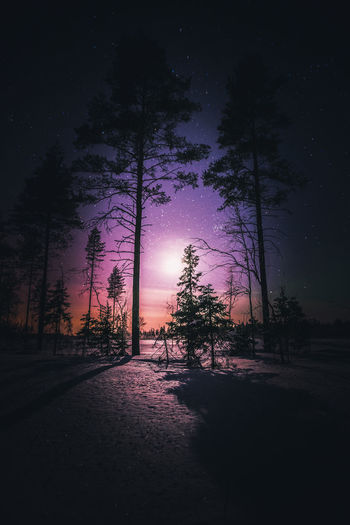 Night vibes Tree Sky Beauty In Nature Tranquility Tranquil Scene Nature No People Night Forest Outdoors Colors Moon Landscape Atmospheric Mood Nature_collection Photography Light And Shadow Star - Space Astronomy Winter Snow Scenics Freshness Cloud - Sky Hello World