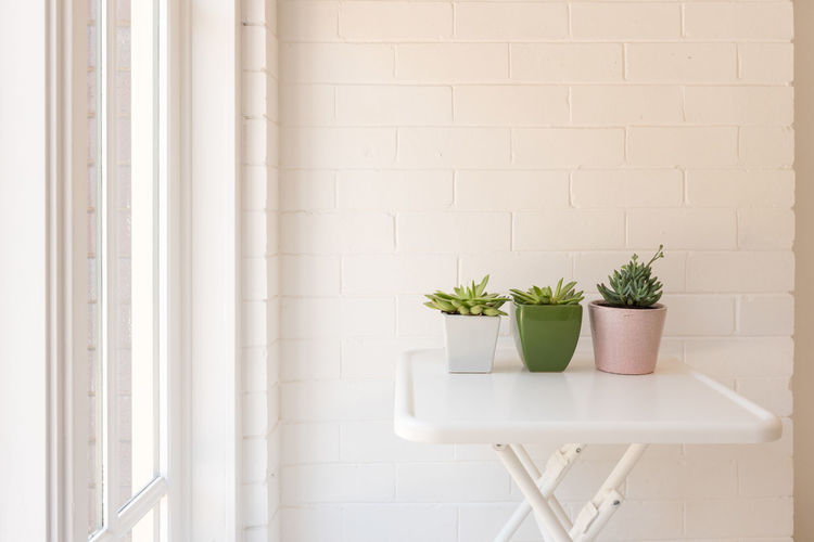 Succulents on table next to window Potted Plant Plant Indoors  Wall - Building Feature Nature Growth No People Green Color Leaf Plant Part Succulent Plant Architecture Day Built Structure White Color Houseplant Container Flower Pot