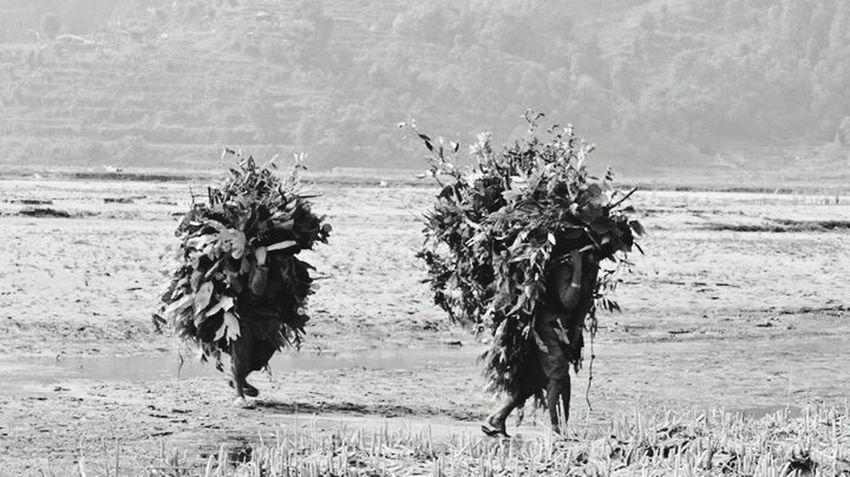 Kathmandu, Nepal Nature Working Plant Calm Woman Woman Power