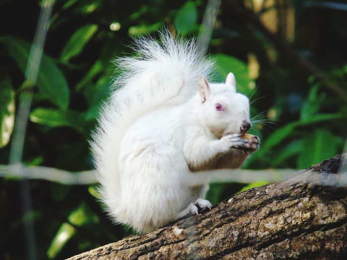 Nature surely is beautiful Albino Squirrel Tree Tail Close-up Squirrel Peanut - Food Nutshell Fluffy