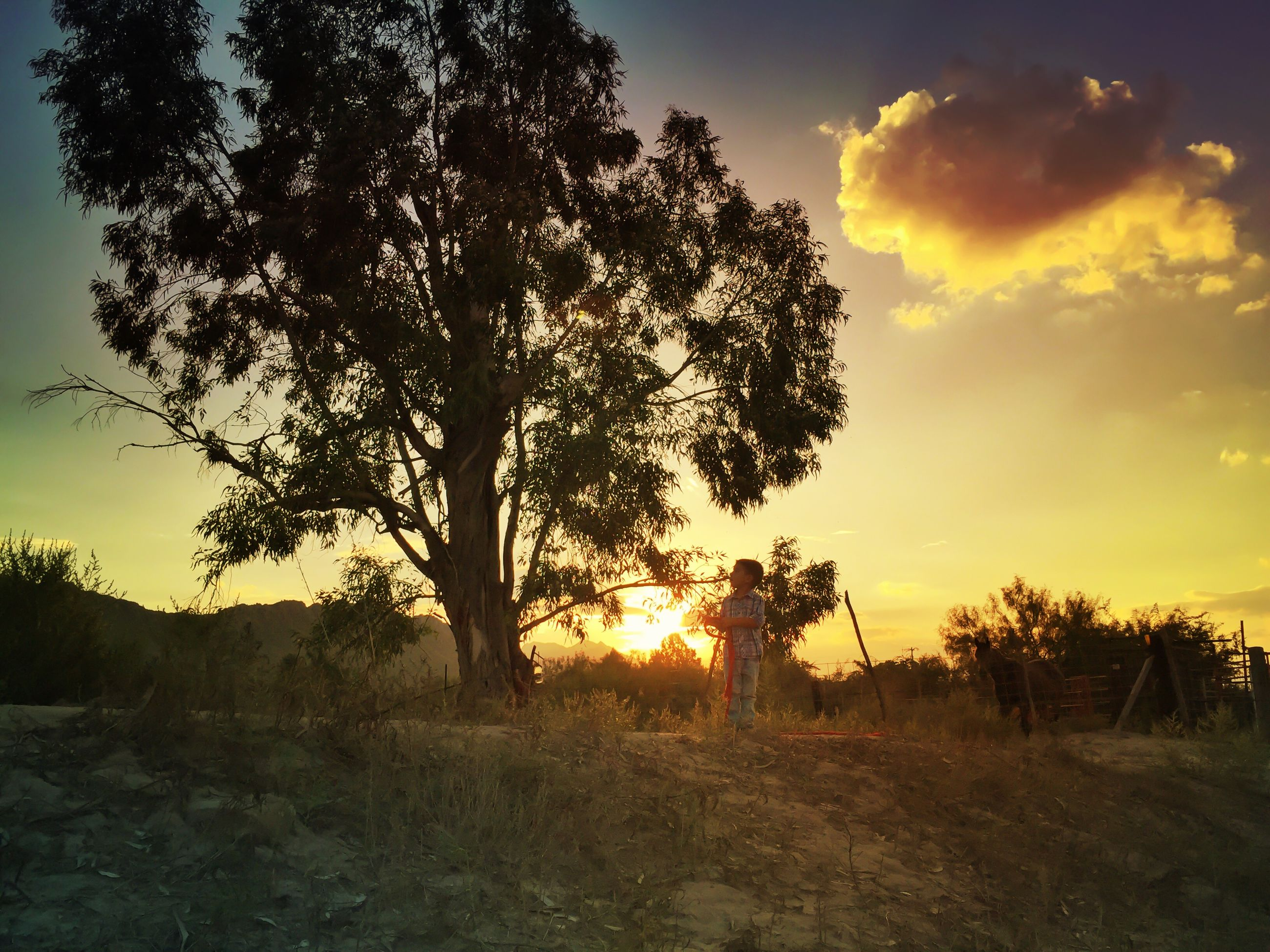 sunset, silhouette, tranquil scene, tranquility, sky, tree, sun, scenics, orange color, beauty in nature, landscape, nature, field, idyllic, sunlight, cloud - sky, back lit, growth, non-urban scene, outdoors