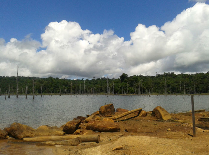At the edge of the Brokopondo Reservoir in Suriname. EyeEmNewHere Beauty In Nature Cloud - Sky Day Nature No People Outdoors Reservoir River Riverbank Sand Scenics Sky Tranquil Scene Tranquility Tree Water