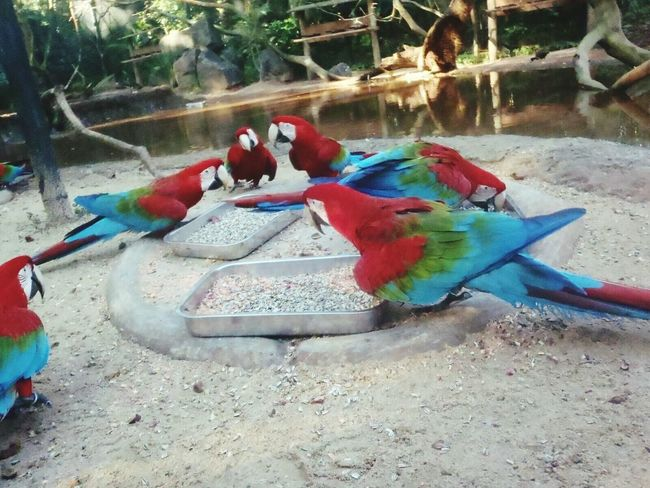 Macaw, Day Macaw Outdoors No People Nature ,exotic Animals In The Wild Animals🐾 One Animal Beauty In Nature Travel Destinations Tourism Forest Life Power In Nature Nature