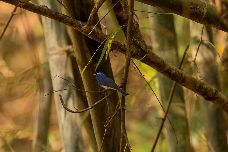 Close-up of bird perching on branch in forest