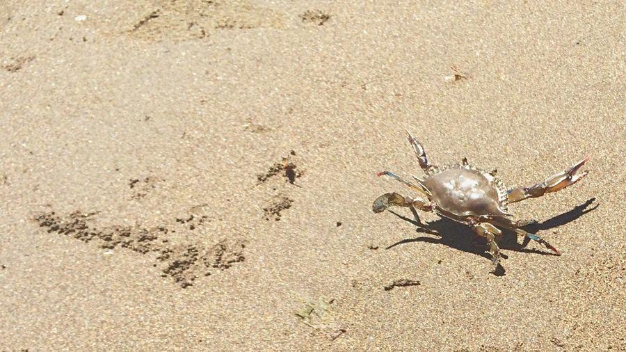 Fine Art Photography Crab El Salvador Im 14