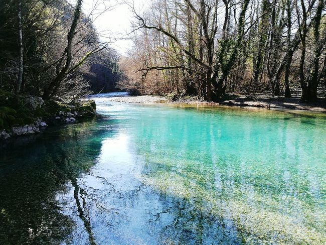 River Riverside Riverview Riverbank Blue Water Tree Nature Beauty In Nature Scenics Tranquil Scene Outdoors Tranquility Beauty Voidomatis Greece Zagori