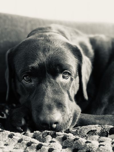 Close-up portrait of dog relaxing on floor