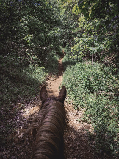 Horse walking on dirt road in forest