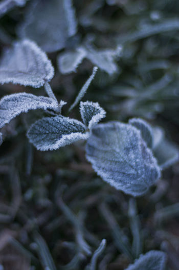 Winter Cold Temperature Plant Close-up Snow Growth Beauty In Nature No People Frost Nature Frozen Ice Day Focus On Foreground Vulnerability  Leaf Fragility Plant Part White Color Outdoors Softness Blizzard