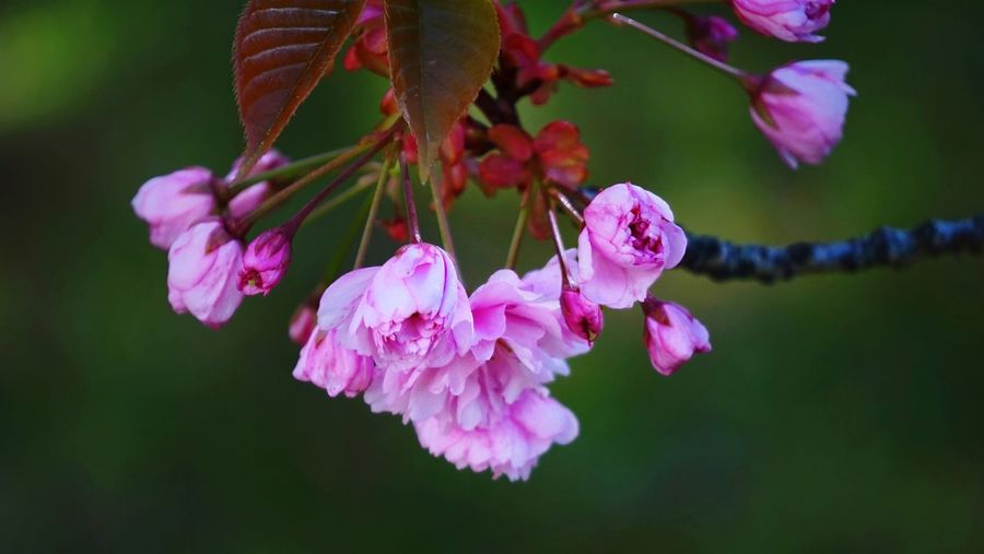 spring flowers Colorful Spring Flowerheat Beauty In Nature Leaves Pink Evening Light Still Life Flower Flower Head Pink Color Close-up Plant Flower Tree Stamen Blossom Plant Life In Bloom