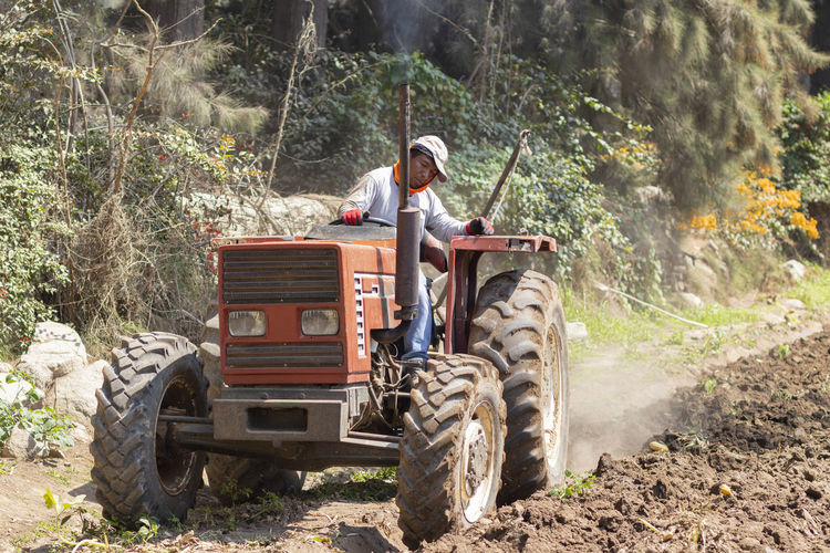 Man driving tractor on dirt road amidst trees in forest