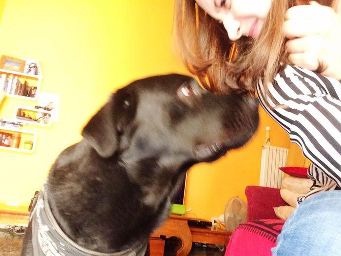 ninetto il cane mafioso 🐻 Dog Italy Love Doglover
