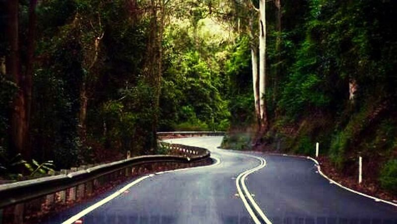 South Coast NSW Joy Ride Scenery Nature Green Trees Windy Road Enjoying Life Happiness
