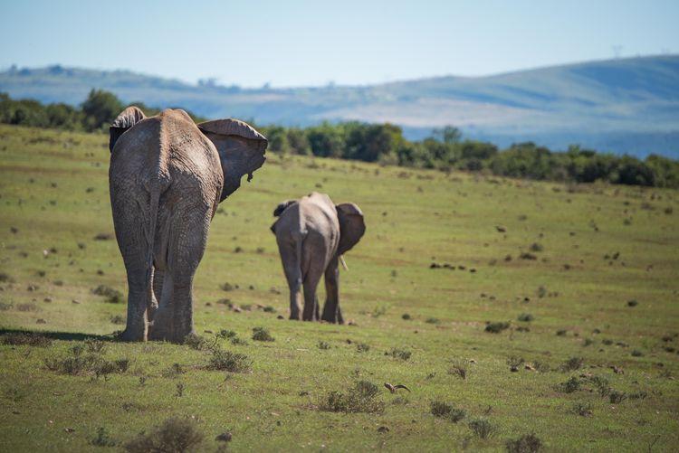 Elephants on field against sky