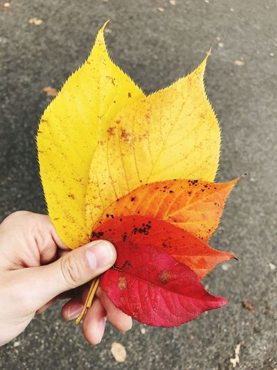 Autumn Autumn Colors Autumn Leaves Human Hand Real People Red Yellow One Person Holding Human Body Part Lifestyles Close-up Day Outdoors Freshness Nature People